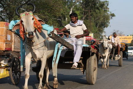 26985410-bullock-cart-on-road-shot-at-afternoon-hours-on-march-26-2014-at-patna-bihar-india